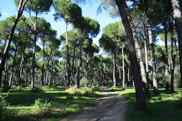 piniový les